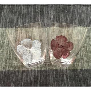 スガハラ(Sghr)のスガハラガラスのグラス プルーメオールド 色違い2個 B品  (グラス/カップ)