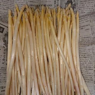 佐賀県産極細ホワイトアスパラ1.8キロ(訳あり)(野菜)