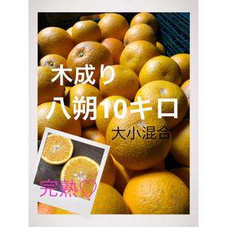 和歌山県産有田木成り八朔大きめ10キロ 家庭用(フルーツ)