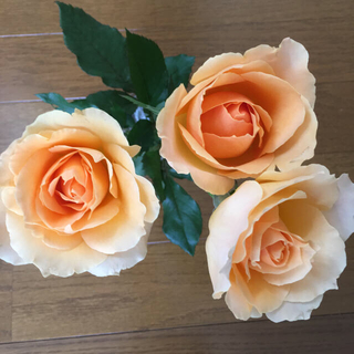 4/5まで*ブルームーン・オークランド  切り花品種  バラ苗(その他)