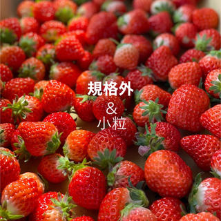 規格内、規格外さがほのか2kg●大きさ無選別●クール便込み●いちご苺イチゴ(フルーツ)