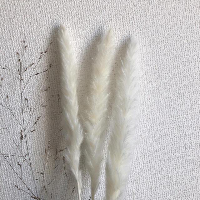 taka様専用〜 ハンドメイドのフラワー/ガーデン(ドライフラワー)の商品写真