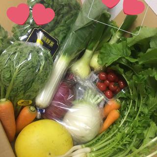 高井セレクト野菜お試しサイズ(野菜)