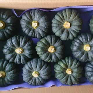黒皮かぼちゃ、5キロ、熊本産(野菜)