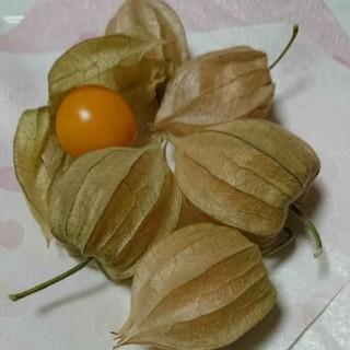 ②食用ほうずき  種30粒+α(野菜)