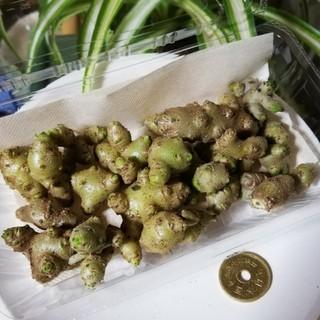 おかわかめ むかご 約100g(約24個)(野菜)