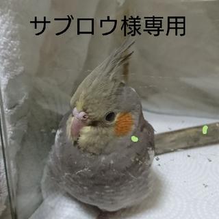 専用 ページ☆ インコちゃんストラップ☆(おもちゃ/ペット小物)