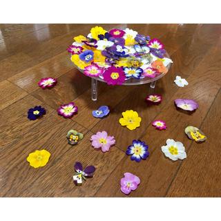 お花屋さんが作った春色プリムラ30冠と彩りビオラ40冠の山盛り70冠‼️(ドライフラワー)