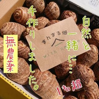 無農薬 里芋 1キロ超~ 送料無料!(野菜)