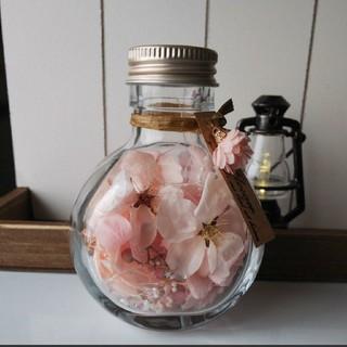 SOLD OUT ころんとした桜のボトルフラワー*.゚ ピンク(その他)