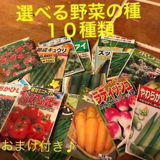 選べる 野菜の種 小分け 10種類(野菜)