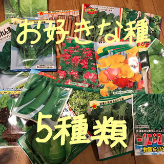 cocoiroさま専用 選べる 野菜の種 小分け 5種類(野菜)
