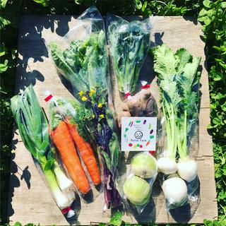 【冷蔵便】旬彩春の味覚野菜バスケット(野菜)