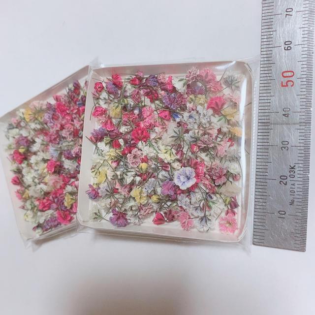 かすみ草 ドライフラワー 開きかけ蕾ピンクパープル ハンドメイドのフラワー/ガーデン(ドライフラワー)の商品写真