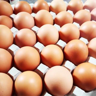 平飼いたまご ✴︎高原卵 10個入り5パック M ~Lサイズ✴︎(野菜)