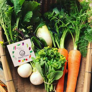 【冷蔵便】渥美半島から直送!旬彩春の野菜バスケット(野菜)
