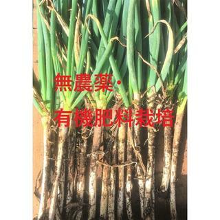 無農薬土付き白ネギ2kg 鳥取県大山火山灰で栽培(野菜)