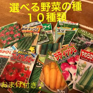 kirakoさま専用です 選べる 野菜の種 小分け 10種類(野菜)