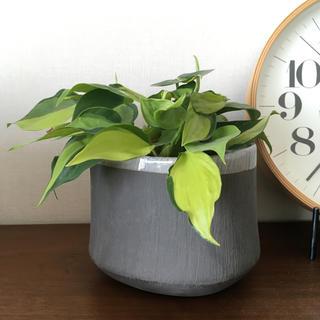 アクタス(ACTUS)の〈未使用品〉ACTUS アクタス 鉢カバー 観葉植物(花瓶)
