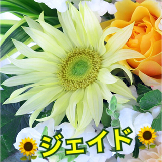 花 種 ✳️2種おまとめ✳️(その他)