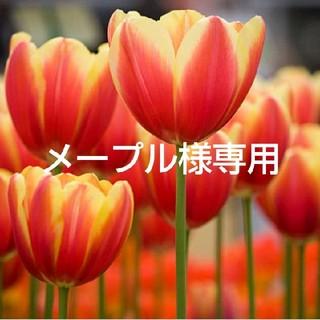 カネボウ(Kanebo)のメープル様専用(ブースター/導入液)