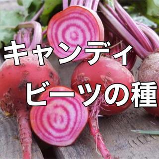 【超かわいい‼️】キャンディビーツの種20粒 野菜 種 家庭菜園 タネ ビート(野菜)