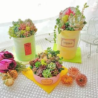 多肉植物 春の寄せ植え シンプルcolor すぐ飾れる3点セット◎(その他)