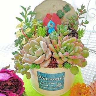 多肉植物 春寄せ植え 小人の多肉の森 クリームバニラリメ鉢×welcomeラベル(その他)