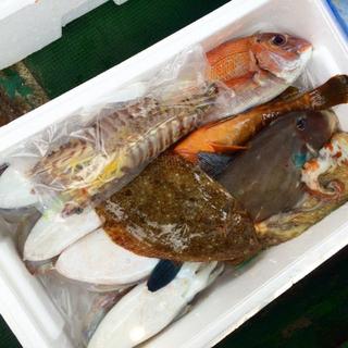 新鮮  瀬戸内  漁師  朝採れ  鮮魚  詰め合わせ  卸  3キロ