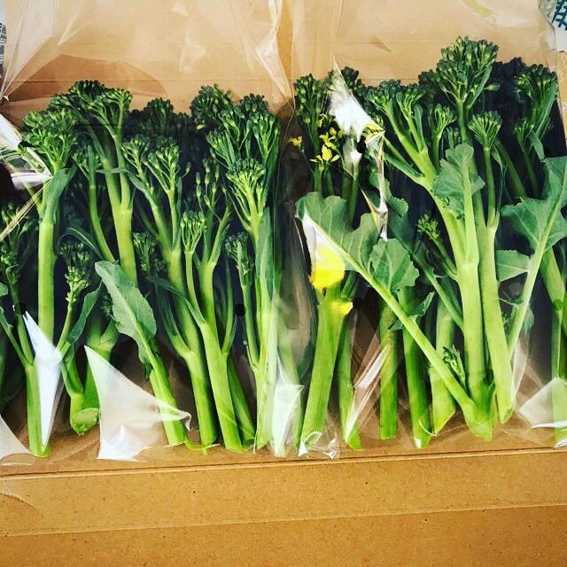 無農薬 スティックブロッコリー 食品/飲料/酒の食品(野菜)の商品写真
