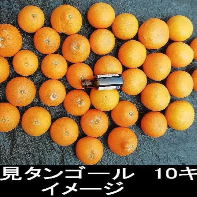 ☆ き大3 えひめヌーボーの 清見タンゴール 少し訳あり 16キロ  食品/飲料/酒の食品(フルーツ)の商品写真
