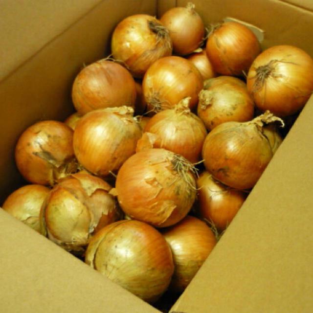 玉ねぎ9キロくらい 食品/飲料/酒の食品(野菜)の商品写真