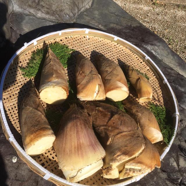 熊本県八代産 たけのこ 3kg コメヌカ付き 食品/飲料/酒の食品(野菜)の商品写真