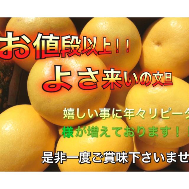 高知土佐文旦 大玉4L3L混合10kg 家庭用 食品/飲料/酒の食品(フルーツ)の商品写真