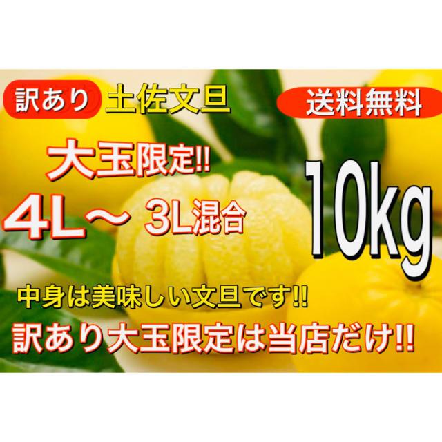 訳あり 土佐文旦 4L〜 3L サイズ混合 10kg 送料無料 食品/飲料/酒の食品(フルーツ)の商品写真