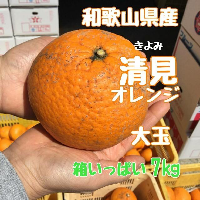 清見オレンジ 大玉   7㎏ 訳あり 食品/飲料/酒の食品(フルーツ)の商品写真