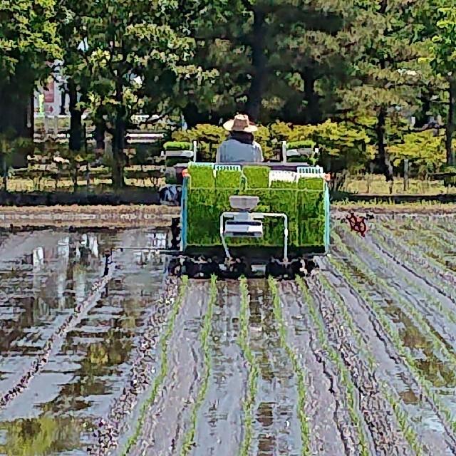 ✳️新米白米✳️富山県産1等米検査済コシヒカリ10㎏玄米精米4.5㎏白米✖2   食品/飲料/酒の食品(米/穀物)の商品写真