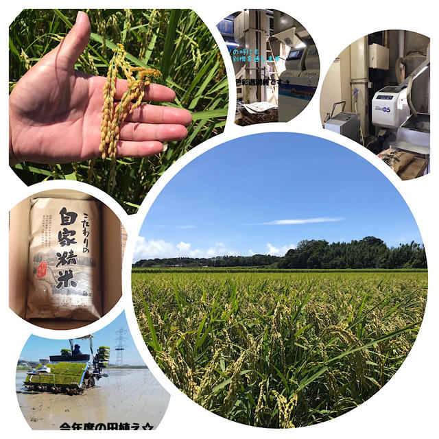 愛知県産コシヒカリ 10㎏(白米9㎏) 食品/飲料/酒の食品(米/穀物)の商品写真