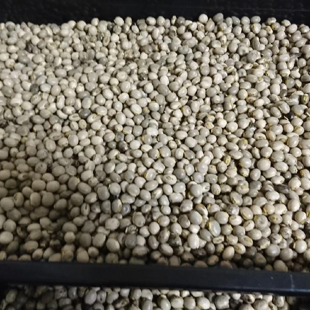 ムクナ豆(中粒)1000g 食品/飲料/酒の食品(米/穀物)の商品写真