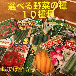 ダックダック様 専用です   野菜の種 小分け 10種類(野菜)