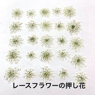 【25枚】レースフラワー の押し花(ホワイト)(ドライフラワー)