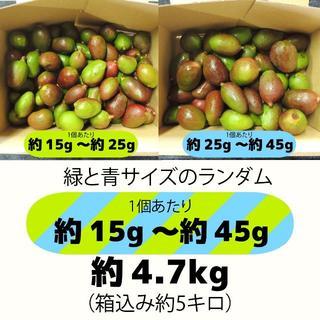 [約15g~45g]約4.7キロ グリーンマンゴー 青マンゴー 加工用 マンゴー(フルーツ)