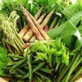 山菜(タラの芽、コゴミ 、わらび)(野菜)