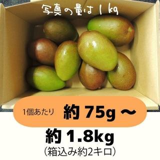 [橙2-1]約1.8キロ グリーンマンゴー 青マンゴー 加工用 マンゴー(フルーツ)