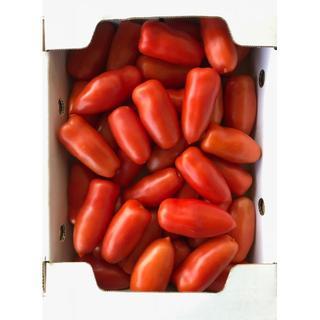 美肌トマト(サンマルツァーノリゼルバ) 1.6㎏(野菜)