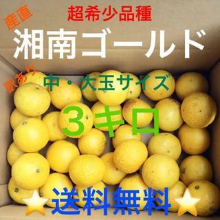 湘南ゴールド3キロ訳あり♪Lサイズ★湯河原産直★超希少品種みかん③(フルーツ)