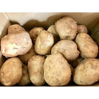 高知県産新じゃがいも potato