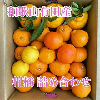 和歌山有田産 柑橘詰め合わせ(フルーツ)