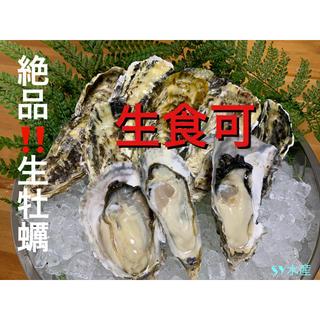 お試し用 生牡蠣 1.2キロ 伊万里湾産 殻付きカキ ナイフ軍手付き 送料無料!