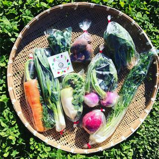 【冷蔵便】渥美半島から直送!旬彩野菜バスケット(野菜)